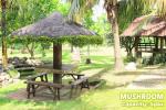 La Leona Resort - Mushroom
