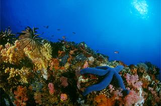 isla verde batangas center of most diversed marine ecosystem