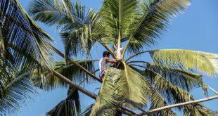 Pangunahing kabuhayan ng ating mga kababayan sa San Juan, Batangas
