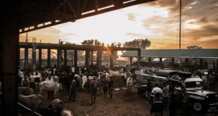 Padre Garcia Livestock Auction Market