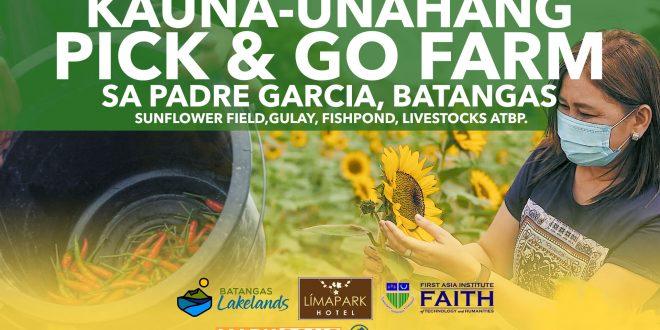 Dayuhin ang Sunflower Fie at mamute ng sariwang gulay atbp sa Pick & Go Farm ng Padre Garcia